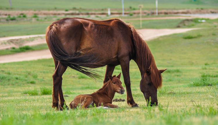 马,母马,小马
