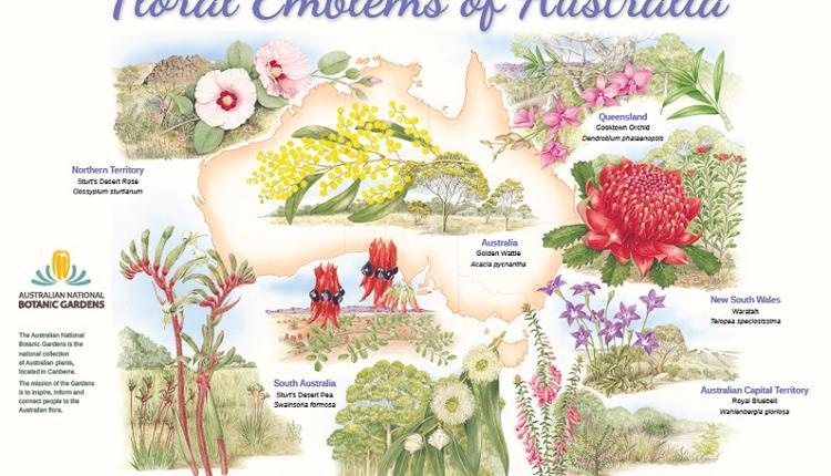 澳洲国花州花