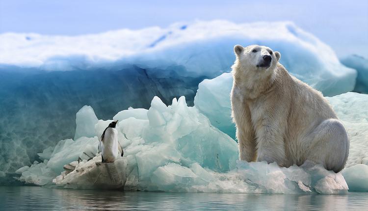 企鹅,北极熊