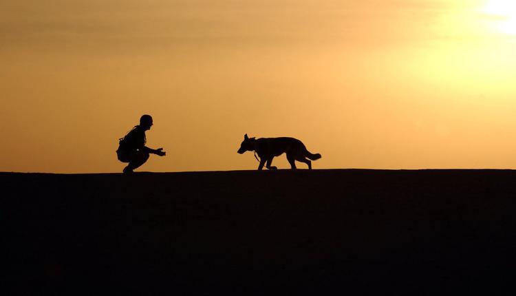 主人与狗狗