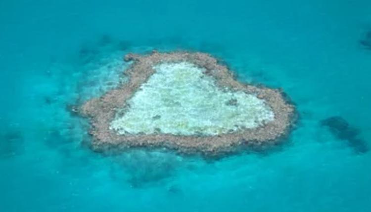 心形珊瑚礁(Heart Reef)