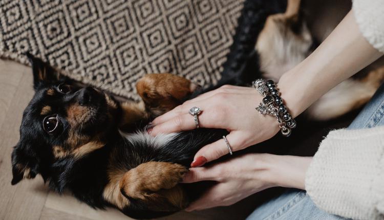 宠物(图片来源:piqsels)