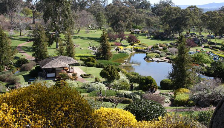 Cowra 旅游澳洲 日本花园