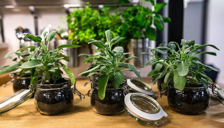 绿色植物示意图(图片来源:Piqsels)