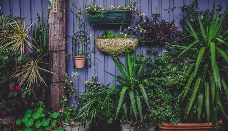 花盆植物示意图(图片来源:Piqsels)