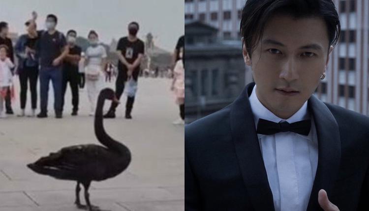黑天鹅与谢霆锋