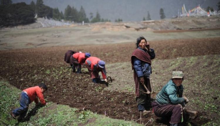 图为中国农民正在耕地